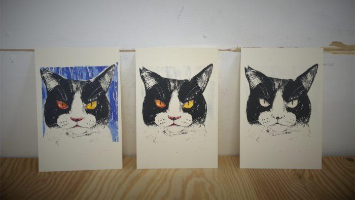 A bicolor cat